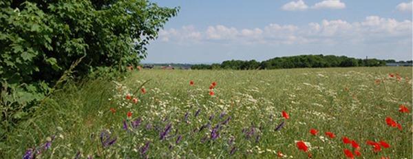 Sommer-Banner-4.jpg